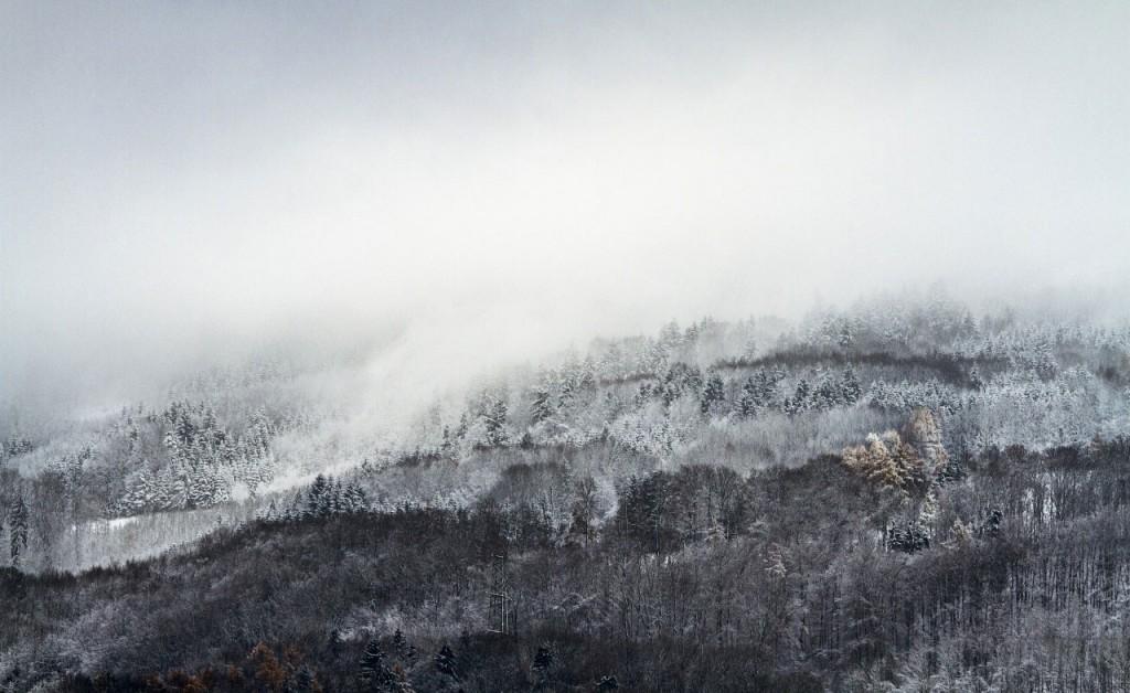 forest_mist_winter-wallpaper-1280x800