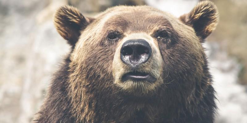 bear-1920x1279